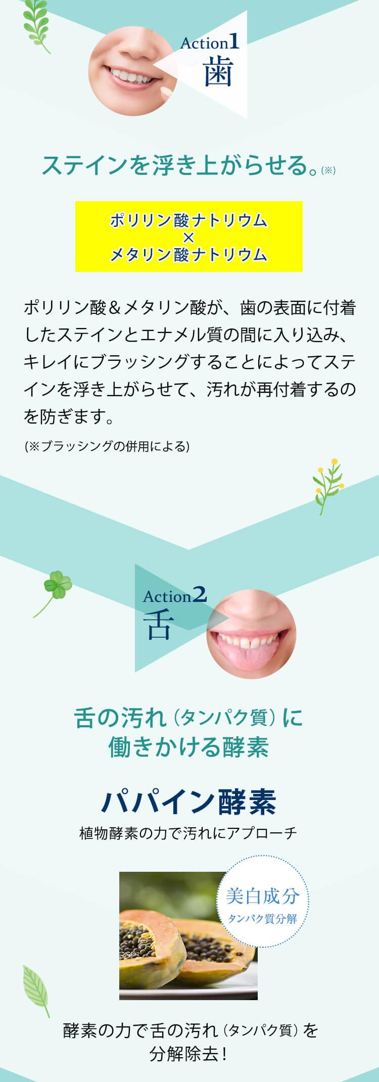 ステインを浮き上がらせる。ポリリン酸ナトリウム メタリン酸ナトリウム 植物酵素/舌の汚れ(タンパク質)に働きかける酵素